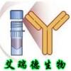 沙丁胺醇进口抗体