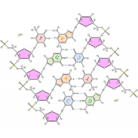 核苷酸系列
